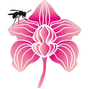 fiore rizoma quadrato