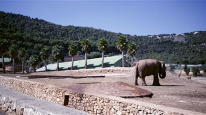 elephant_zoosafari